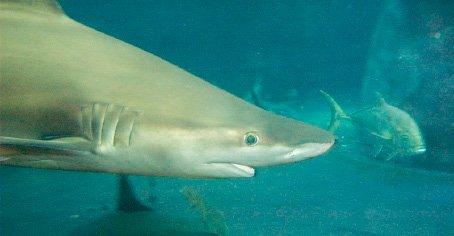 Eilat Dolphin Reef