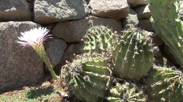 Jardin Botanique à Eilat
