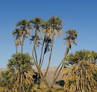 Vallée de l'Arava