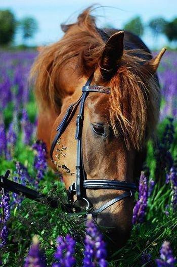 pour un ami qui aime les chevaux