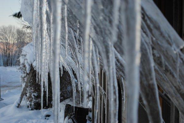 foret de stalactites