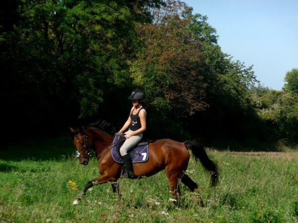 « Il n'y a pas de secrets aussi intimes que ceux d'un cavalier et de son cheval. »