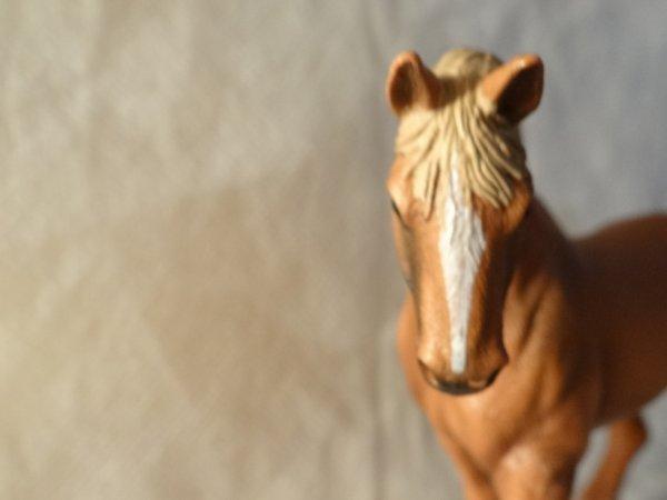 Les chevaux font leurs show