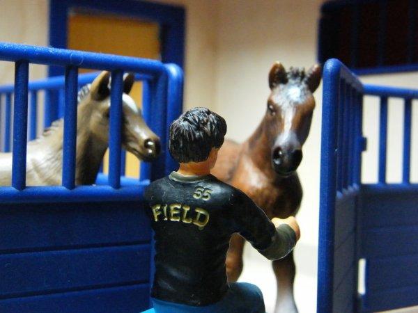 Enzo se raproche de plus en plus des chevaux