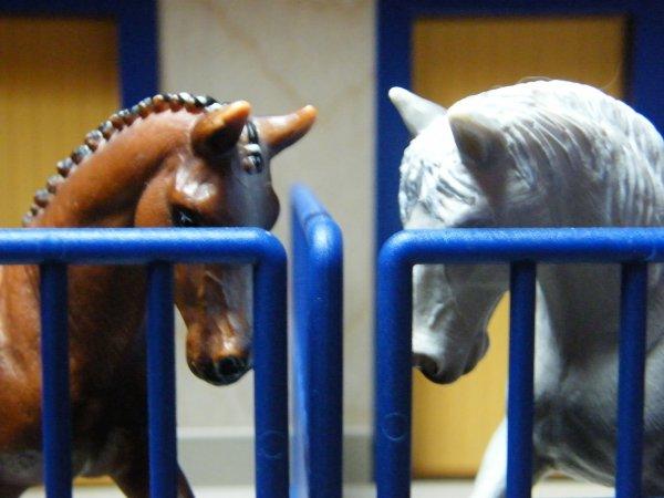 Les chevaux au boxe