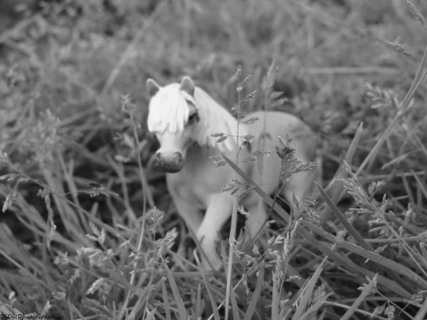 Les chevaux et leurs occupations