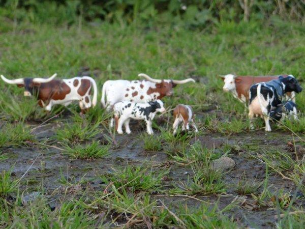 Taureau, vaches et veaux sont tous occupés eux aussi