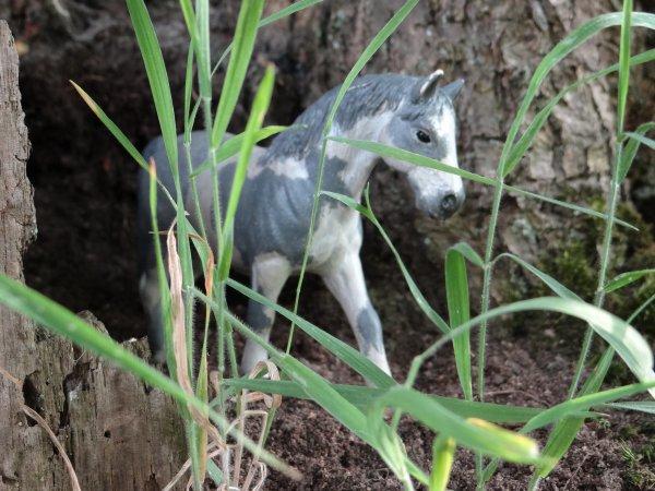 Iris jument du Centre equestre des plumes géantes