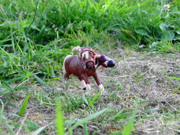 Pour le photo show de schleich-pony-girls