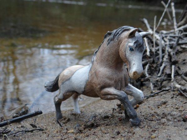 Nos amis les chevaux