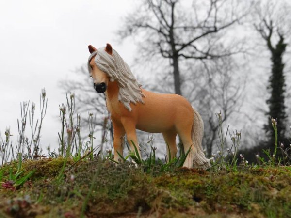 Nos trois nouveaux chevaux achetés en Allemagne