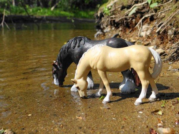 Les chevaux au pré