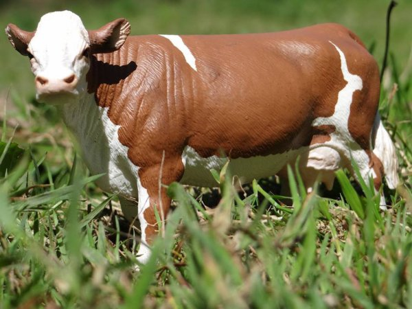 Une autre vaches