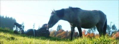 #.o4 . Jamais Je n'orai Put croire Que aimer un cheval Pouvais Etre aussi Fort... ♥