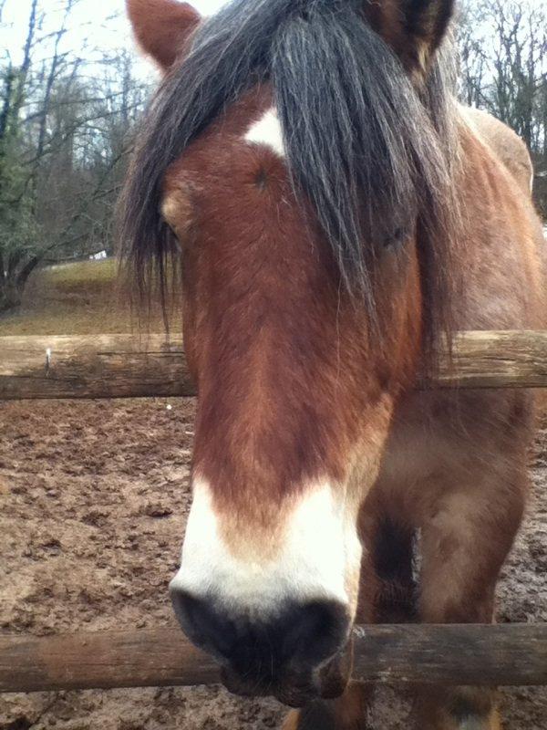 Pompom mon amourse cheval