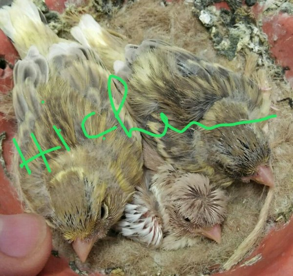 Un de mes derniers nids ?