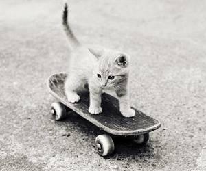 Et oui, un chat c'est intelligent !!!