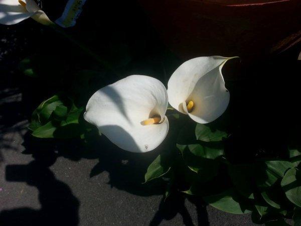 Album Fleur
