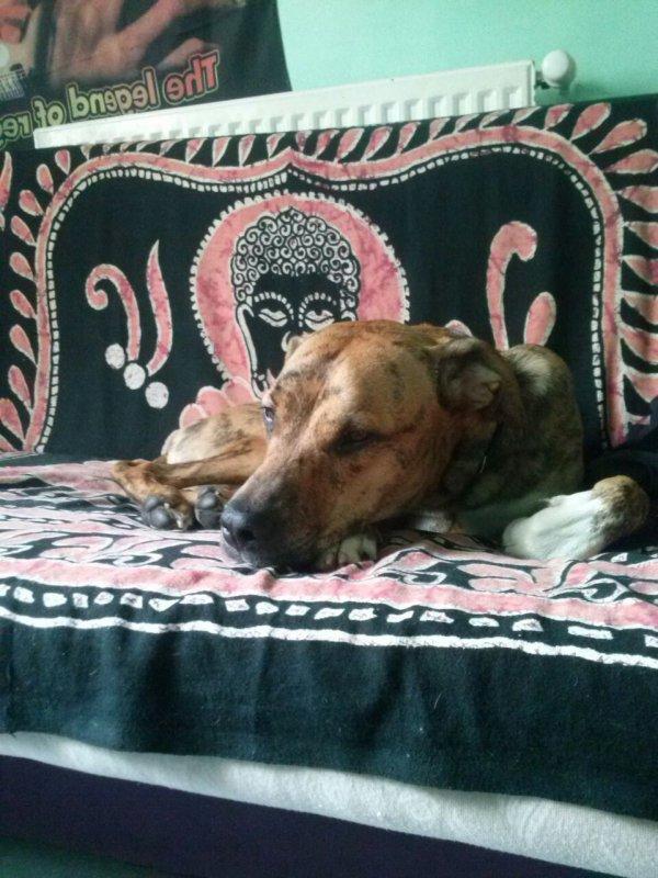 Mon chien Alko 1ans