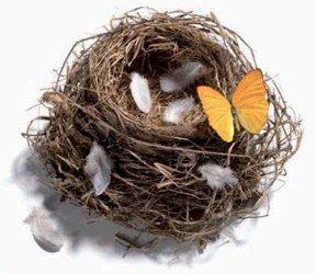 Le nid est vide