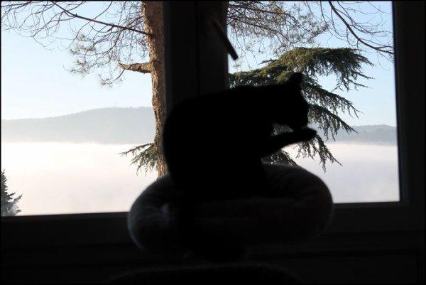 Chalut..léger brouillard ce matin qui va m'obliger à faire mon lavage de pelage sur l'arbre d'interieur..miaoubizzz