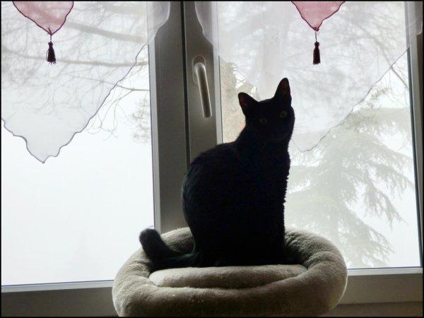 """J'ai oublié de vous montrer..mon KDO du jour..""""ELLE"""" a changé les rideaux..de MA fenêtre..Je m'en occuperais quand """"ELLE sera au boulot..Bonne journée à tous.."""