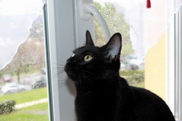 L'ouverture de la fenêtre..c'est rapé !!!!  Bonne journée miaoubizz A ce soir