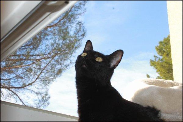 Bonjour..j'y crois pas de mes yeux !!!!!!! le soleil est de retour...les scellés de la fenêtre sont enlevées..waouu..Bonne journée