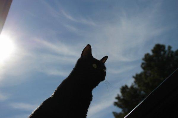 Petit partage de soleil et de ciel bleu..