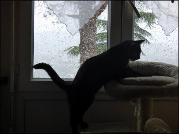 ..pas un espace entre les gouttes..pfff..vision altérée..va falloir trouver une autre occupation..pas un chat qui traine là..encore moins une pie ou autre truc volant..