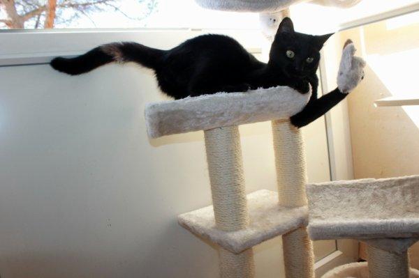 Et hop..une souris attrapée au vol..j'ai une forme olympique ce soir..