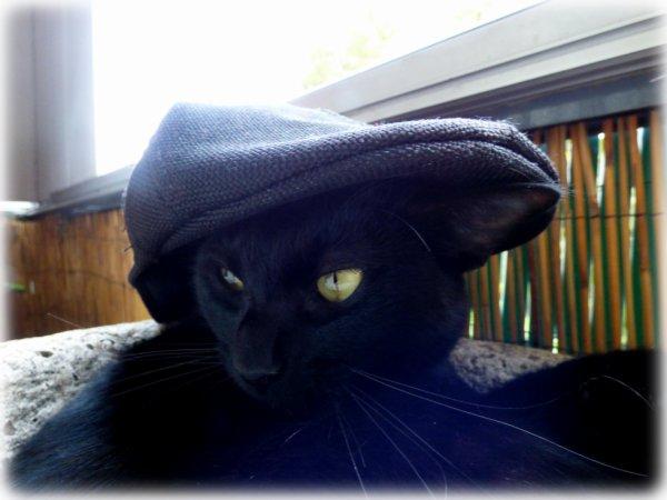 le chapeau est de mise..(j'aime pas les chapeaux !!! ) miaoubizz bonne journée