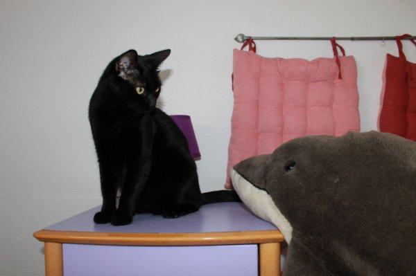 Chat va maintenant..file dans ton bocal le dauphin..! Bonne nuit  à demain miaoubizz