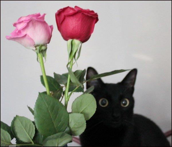Et Après cette entrée fracassante..faudra penser à un laché de roses et je ferais l'étonnée OK