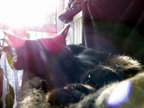 J'suis comme les poules..j'me couche avec le soleil....!!!!!