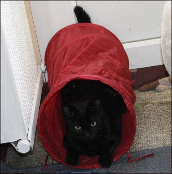 Demain va falloir sortir vos Kat way...pluie pluie pluie...Bonne soirée miaoubizz