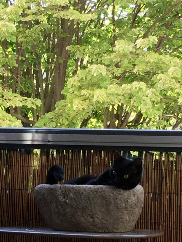 """Je suis solidaire avec toi """"ELLE""""...je vais me reposer à ta place...et je te garde un bout de balcon..pour plus tard..."""