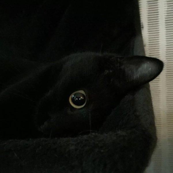 Un oeil...bien..ouvert...sur l extérieur ...de mon hamac...?