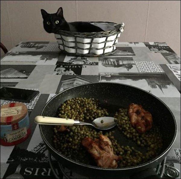 """Et la photo du soir : """"On me dit toujours...descend...de la table...mais je suis pas sur la table !!!! Pff"""""""