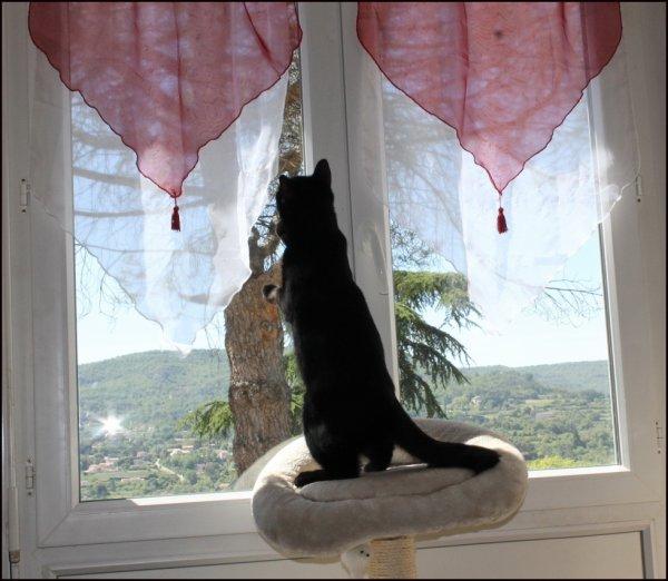 chalut ! j'essaye d'ouvrir la fenêtre mais....c'est dure....je suis en apprentissage !!!
