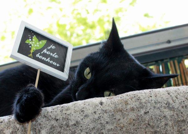 si si un chat noir ça porte bonheur..aussi !!