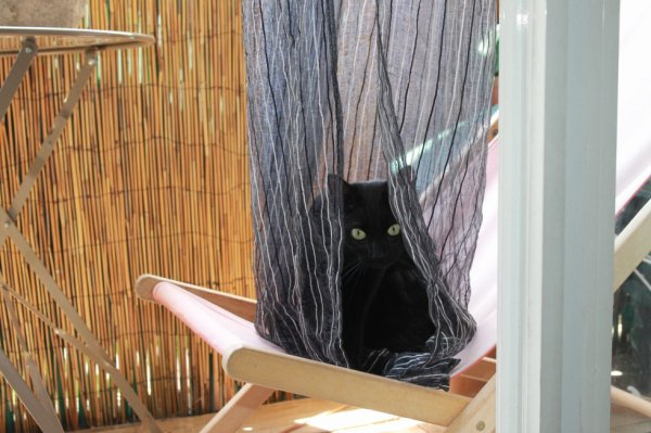 Chalut ! ..le défi du jour..faire une tente avec un rideau pour mon transat..