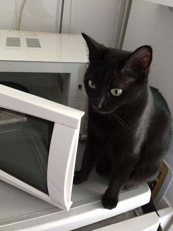 vide de chez vide..je veux mes croquettes speciales chatte stérilisée ..poil brillant..tonus...etc....!!!!!!!!!!!!!!!