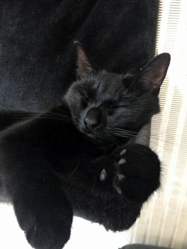 Dormez bien miaoubizz