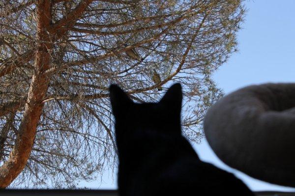 Distraction ce jour..ma fenêtre est grande ouverte...c'est comme ils veulent...