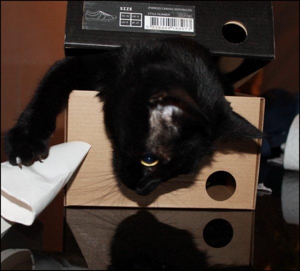 stop là le chat ! c'est mon carton..(mince..c'est mon ombre..) Bonne nuit miaoubizz à touss