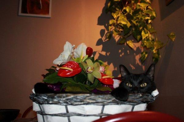 Allez..hop...à la fraîche avec les fleurs..Bonne soirée miaoubizz