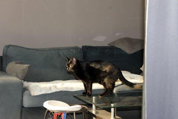""".faudrait qu' """"ELLE"""" ferme les volets là...mon poil se décolore..j'ai une réputation de chatte noir à defendre quand même ! Miaoubizz bonne journée"""