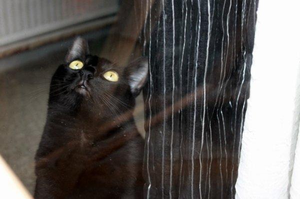 Si la mouche pouvait venir de l'autre côté de la vitre..celà m'arrangerait !