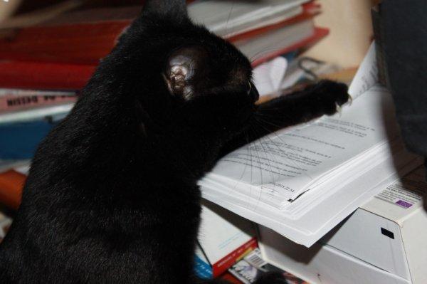 Bonjour..beaucoup de boulot aujourd'hui..faut que je range tout ces papiers..miaoubizz